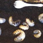 カブトムシの幼虫の飼育・腐葉土は定期的に交換しよう!