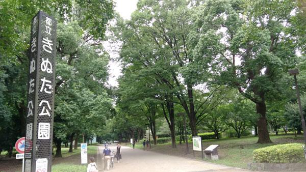 カブトムシを捕まえられる東京都内の公園リスト・詳細案内・砧公園
