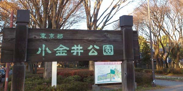 カブトムシを捕まえられる東京都内の公園リスト・詳細案内・小金井公園