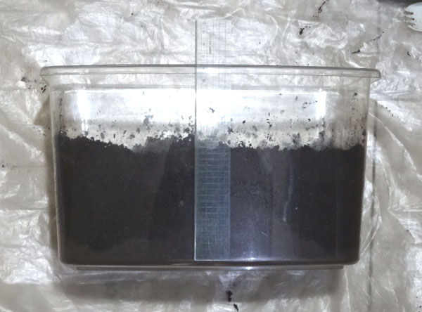 カブトムシのメスが産卵しやすい飼育ケースの作り方・中サイズの飼育ケースで10cm