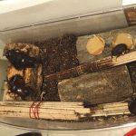 カブトムシの成虫飼育・腐葉土(昆虫マット)、エサのゼリー、飼育ケースの選び方